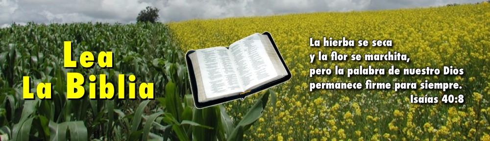 Biblia en campo de flores